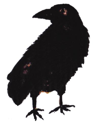 crow2 copy